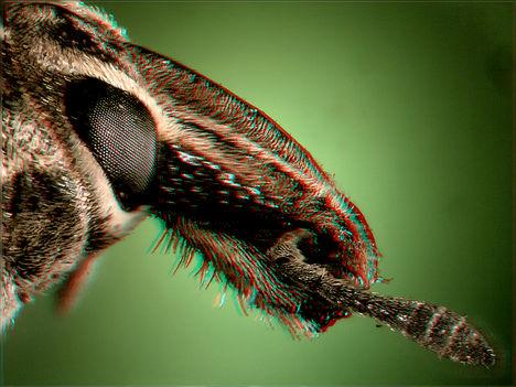 Ormányos bogár 3
