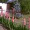 Kardvirág
