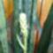 bimbósan közelről