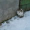 Cula a hóban