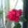 Oné Ildikó virágai