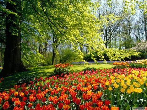 tavaszi kép 1