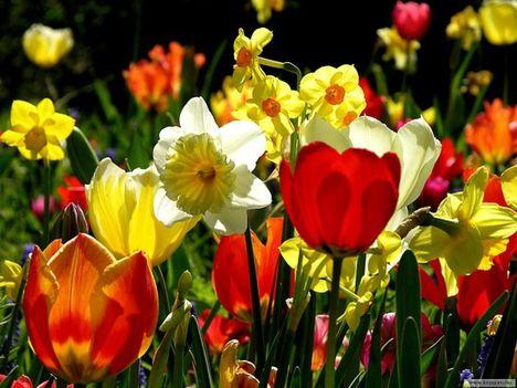 tavaszi kép 11