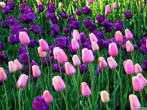 tavaszi kép 4