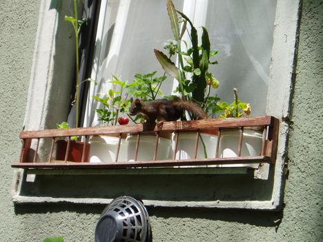 városi mókus2