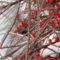 Virágaim, növényeim.2014.02.02. 10