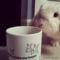 Nyuszi csészével