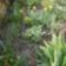 Kis kertjeimből. 2