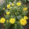 Kis kertjeimből. 3