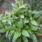 Kis kertjeimből. 6