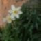 Virágzó természet 10