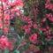 Virágzó természet 13