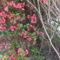 Virágzó természet 2