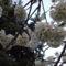 Virágzó természet 3