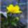 Tavasz a Balatonon