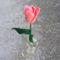 tulipán szezon