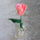 Tulipan_szezon_1828101_6378_t