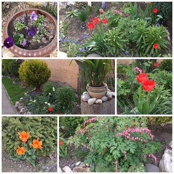 Virágaim -2014- tavasz2