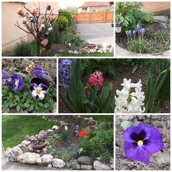 Virágaim -2014- tavasz4