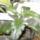növendékek  kis  cserépben