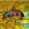 Méhészbogár
