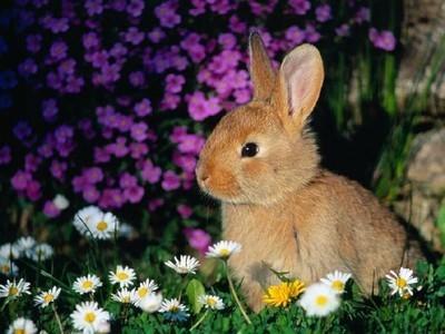 nyúl a virágok között