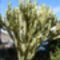 Kaktusz (1)