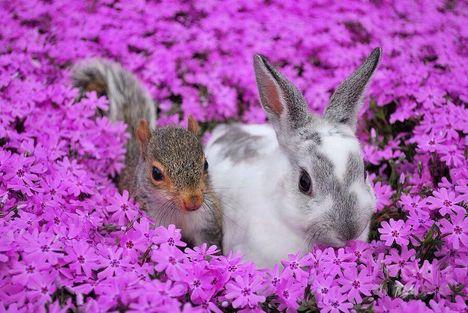 Nyuszi és mókus
