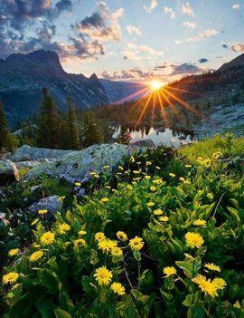Lovas Éva: Néhány szál virág a lelkednek,...