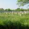 A csornai izraelita temetőben, 2014.05.02.