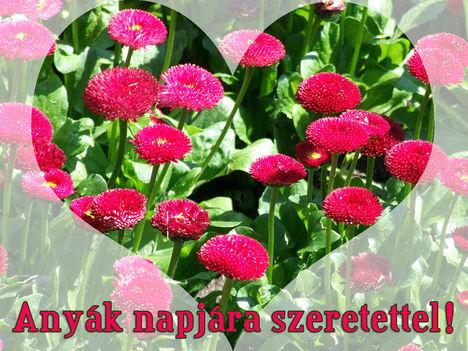 Anyák napjára szeretettel