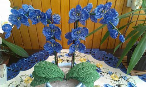 Kék Orchideám