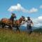 Erdély lovak 8
