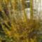 Aranyeső