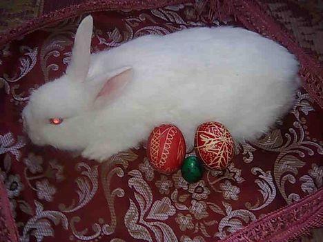 Husveti nyuszi tojasokkal