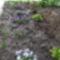 kert részlet