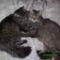 kettő cica