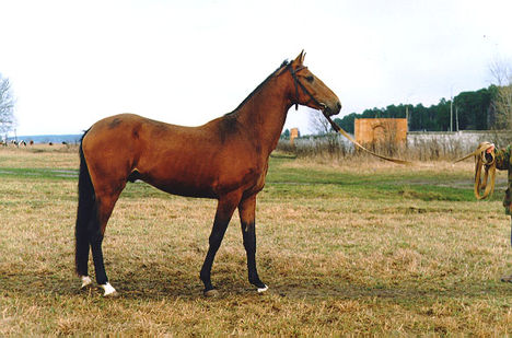 lovas kép 8