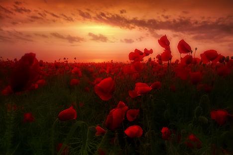 Hajnal a mezőn