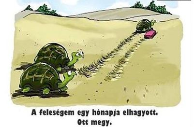 teki_elvalas