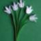 102 Fehér tulipán csokor