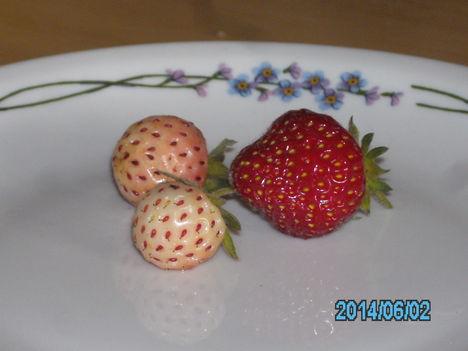Tavasszal ültetett fehér eper első termése
