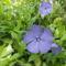 Virágok 3