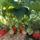 AZ ÉLET KERTJE II.: gyümölcs és kert