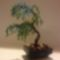 bonsai2d
