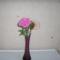Ilkikó rózsája