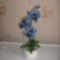 kék orch