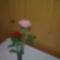 min piros, bar-piros rózsa