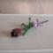 padl tulipán