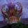 Phalaenopsis_hibrid_1_1853584_3664_t